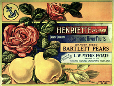 A pear crate label from Louis Meyer's Henriette Orchard